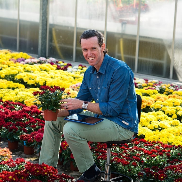 Dave Geerlings, Potchrysanthemum Breeder