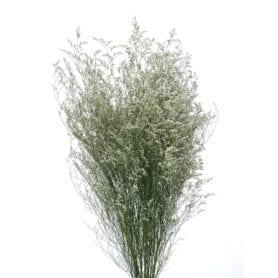 Misty White®