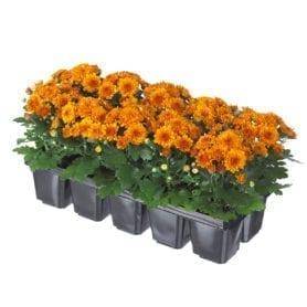 Baby Mum® Orange