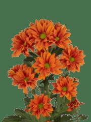 Papaya_tros_tak _grijs